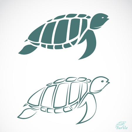 sea turtle: turtle on white background  Illustration