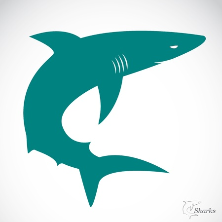 swimming silhouette: Vector image of an shark on white background