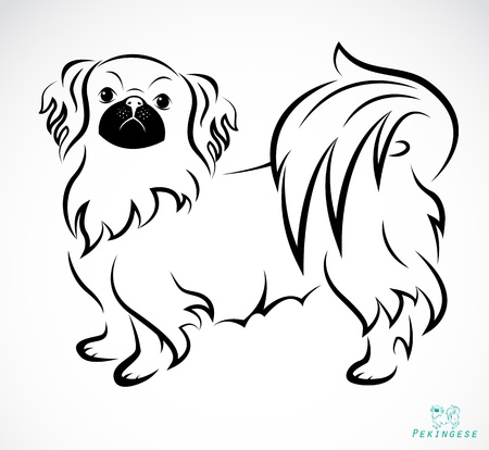image of an Dog (Pekingese) on white background Vector