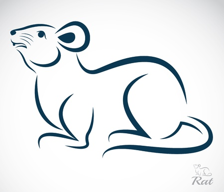 ratones: imagen de una rata en el fondo blanco Vectores