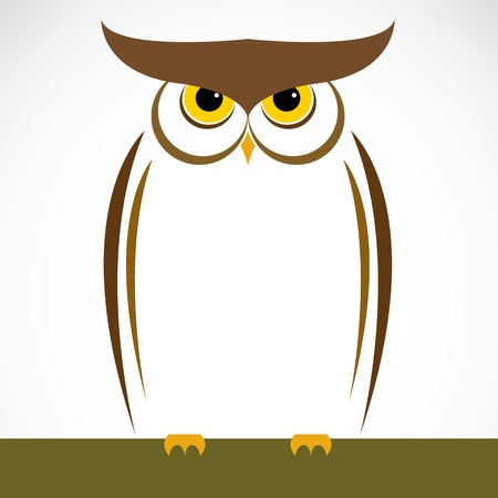 image of an owl on white background