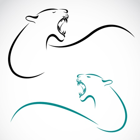 image of an tiger on white background  Vector