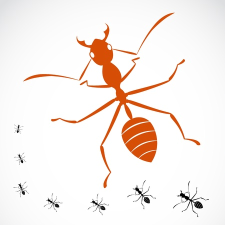 image of an ant on white background  Vector