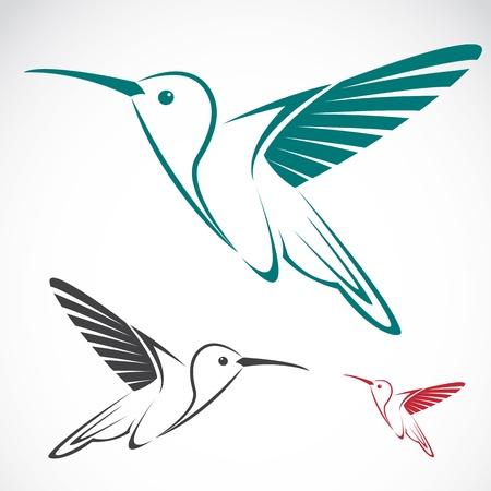 bird of paradise: image of an hummingbird