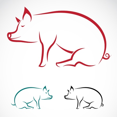 白い背景の豚の画像