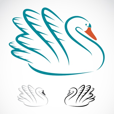 swimming swan: Vector image of swans on a white background. Illustration