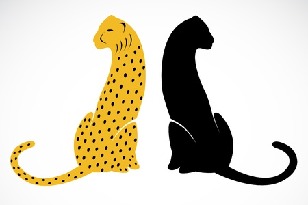 cheetah and jaguar on white background  Vector