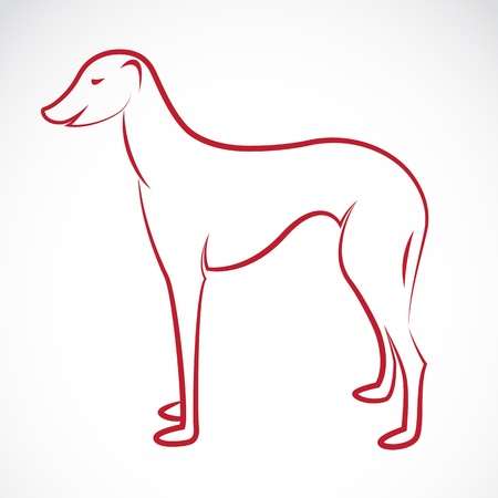 an dog (azawakh) on white background  Vector