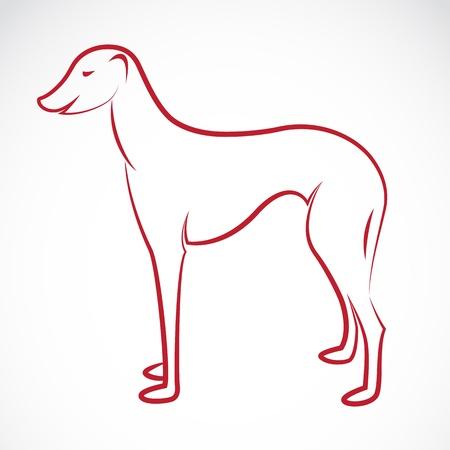 borzoi: an dog (azawakh) on white background  Illustration