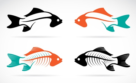 fish bones on white background  Vector