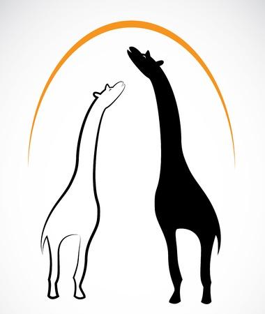 giraffa: jirafa en el fondo blanco Vectores