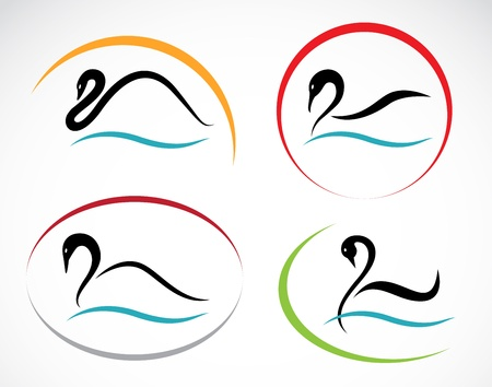 swimming swan: Set of swans on white background