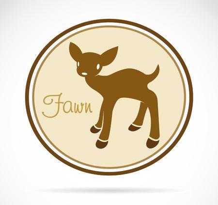 fawn on white background  Illustration