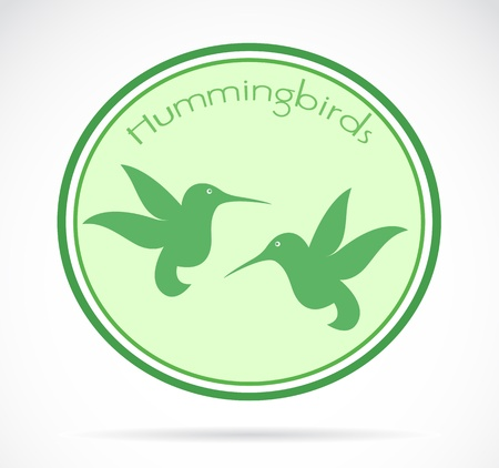 image of an hummingbird on white background  Vector