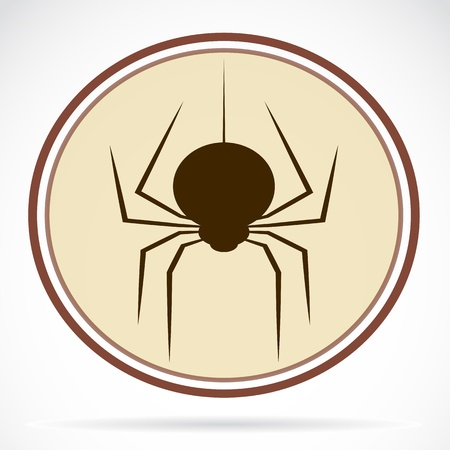 Pictures of brown spiders Vector