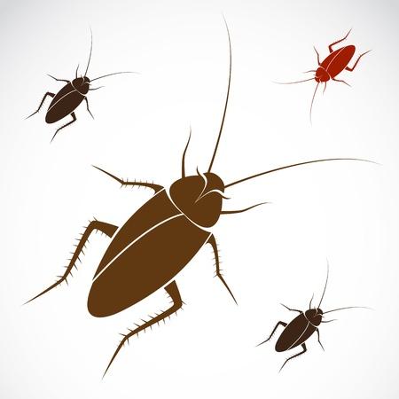 beeld van een kakkerlak op witte achtergrond Vector Illustratie