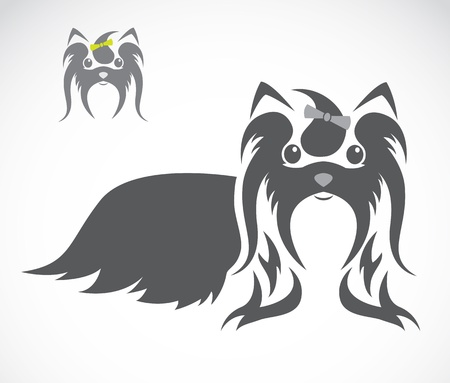 dog grooming: Vector image of an shih tzu dog on white background