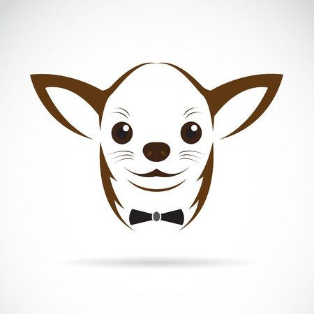 chihuahua puppy: Vector image of an chihuahua dog on white background