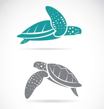 black sea:  Vector image of an turtle on white background  Illustration