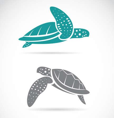 green turtle: Vector immagine di una tartaruga su sfondo bianco