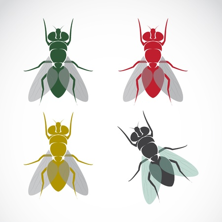 Vector image of an fly on white background