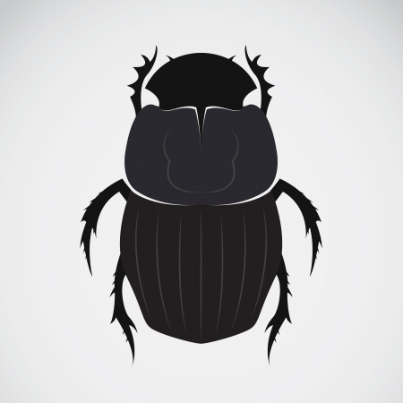 image of an beetle  Vector