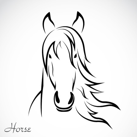 contours: image of an horse