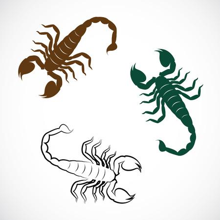 cartoon scorpion: image of an scorpion
