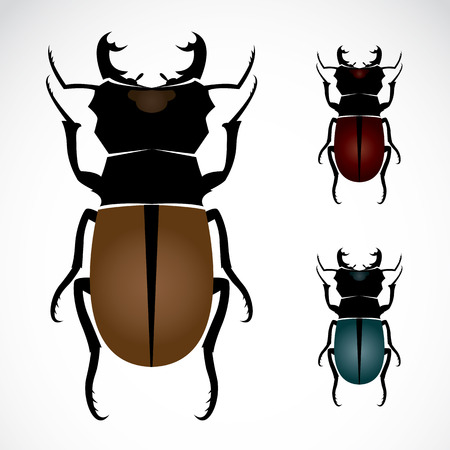 largest: Stag beetle, the largest beetle  Illustration