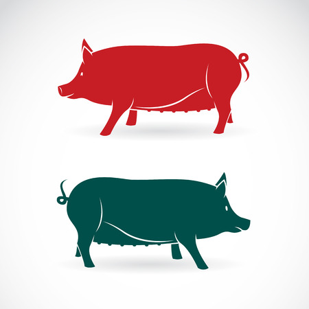 image of an pig  Vector
