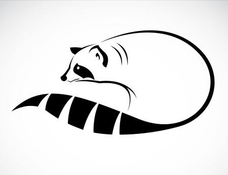beeld van een wasbeer