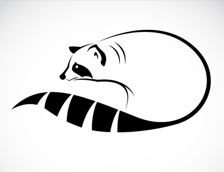 raccoon: image of an raccoon