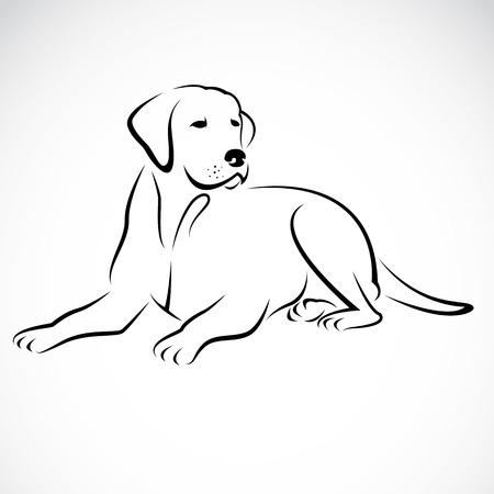 dessin au trait: Vecteur d'image d'un chien labrador sur fond blanc
