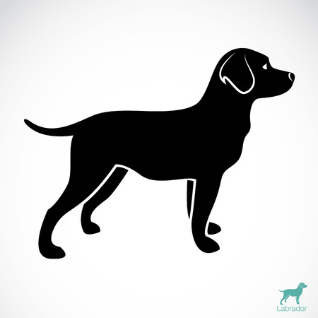 Vector image of an dog labrador on white background  Çizim