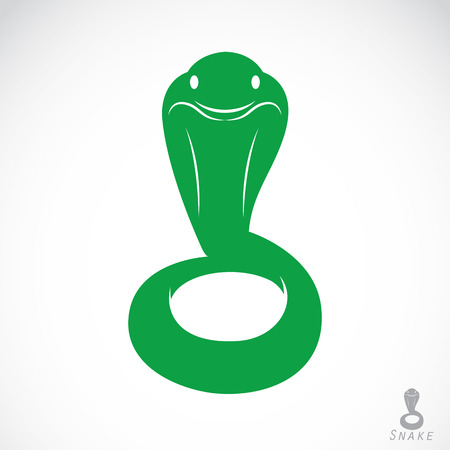 Vector image of an green snake on a white background Vector