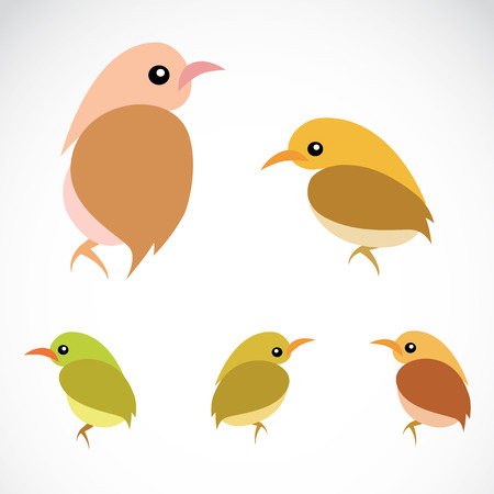 robin bird: Vector image of an sparrow on a white background Illustration
