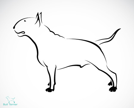 Vector image of an bull terrier on white background Vector