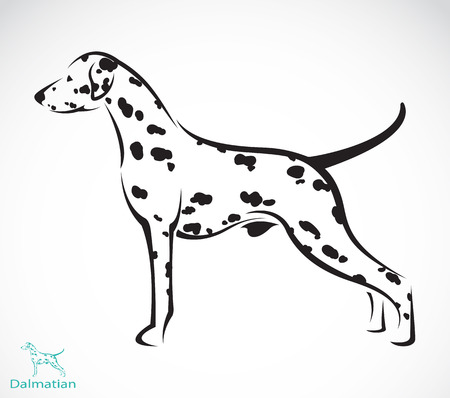 Vector image of an dalmatian dog on white background Vector