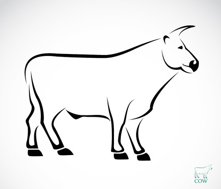 bull's eye: Vector image of an cow on white background