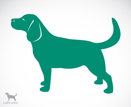 yellow tail: Vector image of an dog labrador on white background