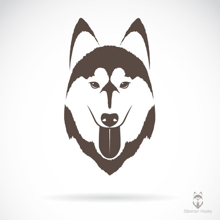 husky: Vector image of an dog siberian husky on white background Illustration