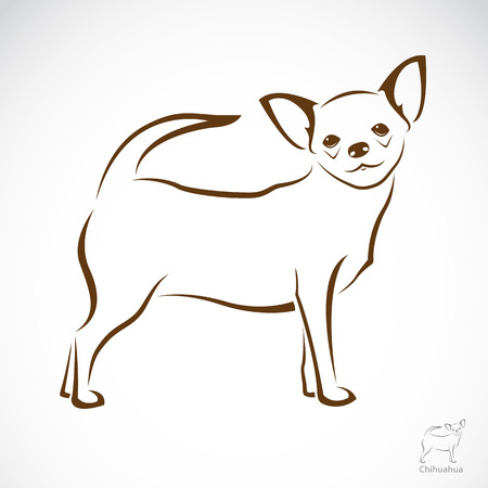 Vector image of an chihuahua dog on white background Vector