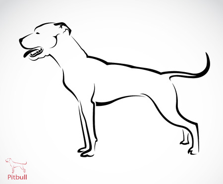 pitbull: Vector image of an pitbull dog on white background