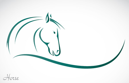 black horses: Vector image of an horse on white background