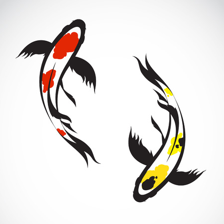 Vector image of an carp koi on white background Vector