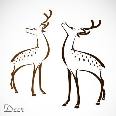 bucks: Vector image of an deer on white background Illustration