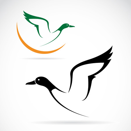 Vector image of an flying wild duck Vector