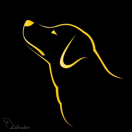 Vector image of an dog labrador on black background Vector