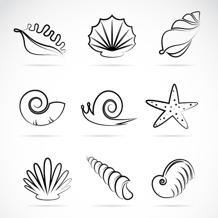 nautilus shell: Vector collection of sea shells and snail