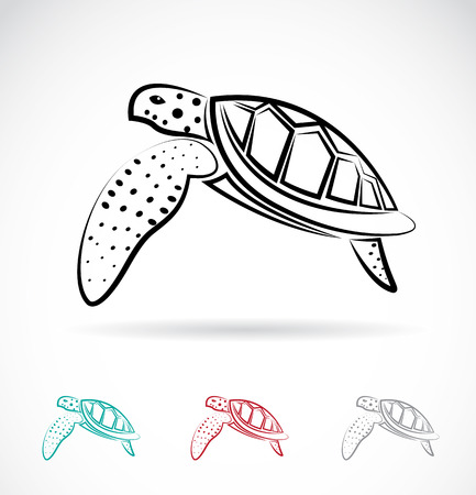 fishes: Vector image of an turtle on white background